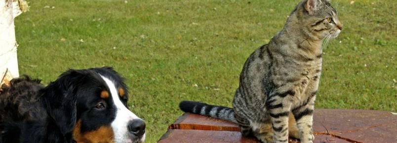 Associações oferecem kit a quem adotar companheiro de quatro patas