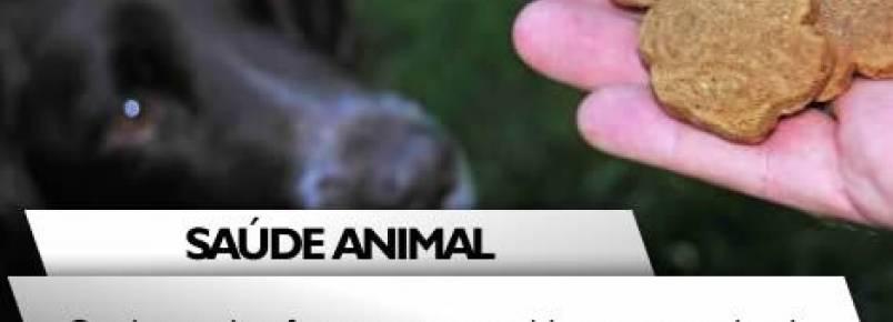 Os riscos de oferecer sua comida ao seu animal