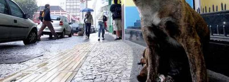 Lei obriga Prefeitura de PG a oferecer medicamento após castração de animais