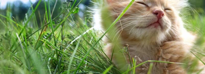 3 dicas para ajudar os gatos a enfrentar o calor do verão