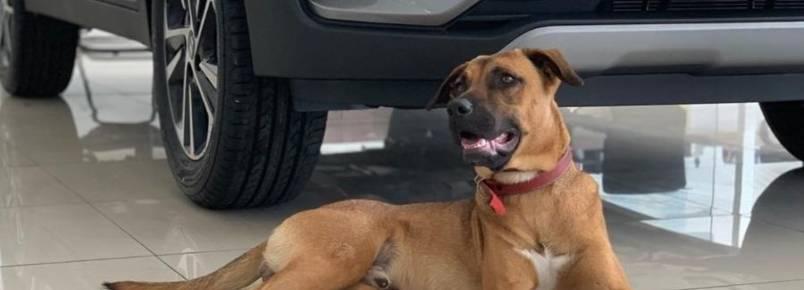 Cão de rua é adotado por concessionária e vira celebridade no Instagram