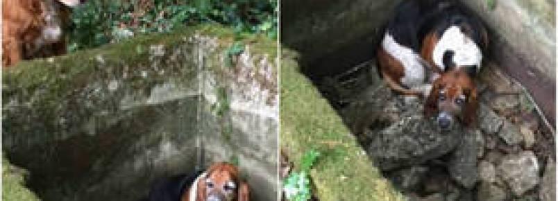 Cachorro fica uma semana ao lado do amigo que caiu em uma cisterna
