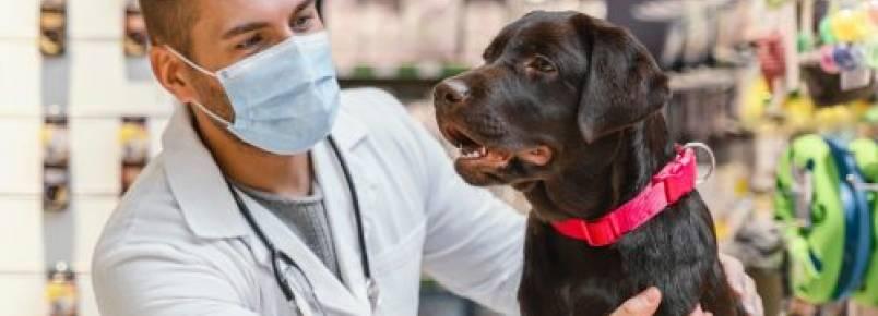 Por que o cachorro comeu papel higiênico?