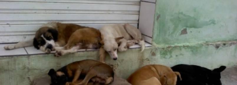 Cuiabá deve recolher animais das ruas