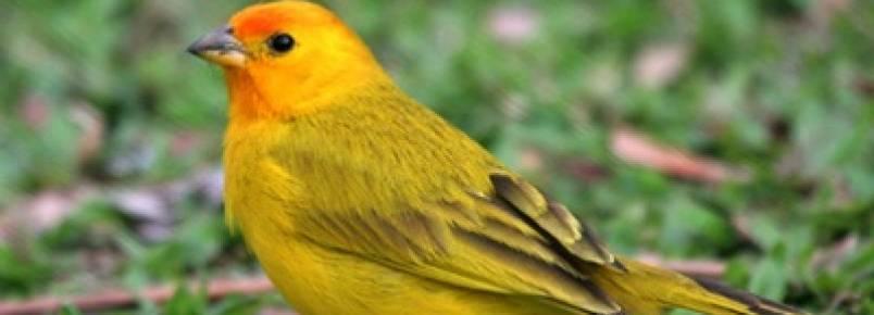 Polícia Ambiental resgata 63 pássaros em Duque de Caxias, na Baixada