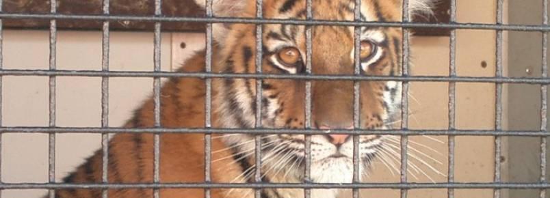 Seguido por México, Holanda também proíbe uso de animais silvestres em circos