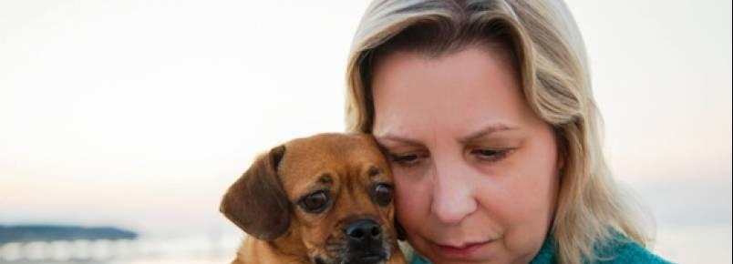 Lei protege animais da violência doméstica em alguns estados dos EUA