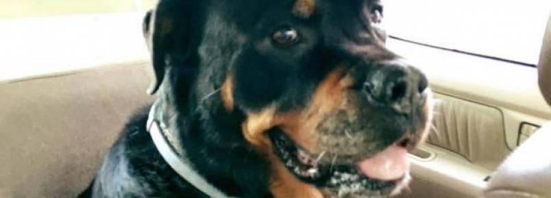 Joss Stone cancela shows para ficar com sua cachorra doente