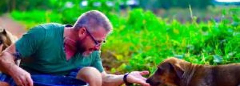 Homem alimenta 80 cães abandonados todos os dias na Tailândia há cinco anos