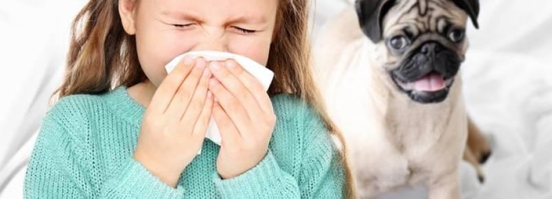 A alergia te impede de ter um pet? Saiba como isso pode mudar