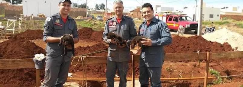 Bombeiros resgatam cachorrinhos que caíram em buraco de 7 metros de profundidade