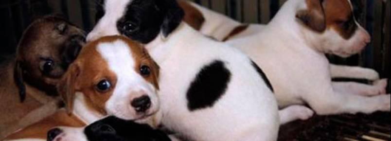 CCZ de São Bernardo realiza Feira de Adoção de Animais neste domingo