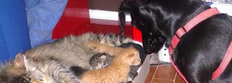 Cachorro se apaixona por sete filhotinhos de gato e cuida de todos eles