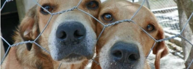 Ipojuca realiza feira de adoção de animais