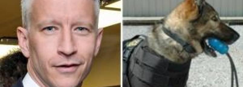 Âncora da CNN doa coletes à prova de balas para cachorros de departamento de polícia da Virgínia