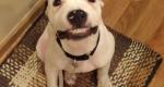 Cachorro sorri quando mulher pede e faz sucesso na Internet
