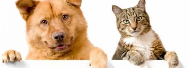 Abrigo para cães e gatos será inaugurado dia 26 em Sorriso