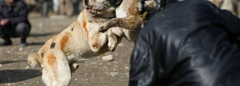 Rinha de animais é proibida no Espírito Santo
