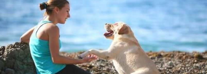 Como ter um cachorro bem-educado?