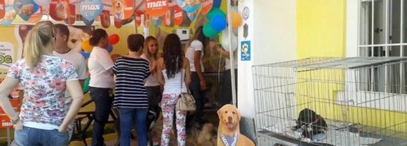Mais de 20 cães conseguiram novos lares durante mais uma feira de adoção