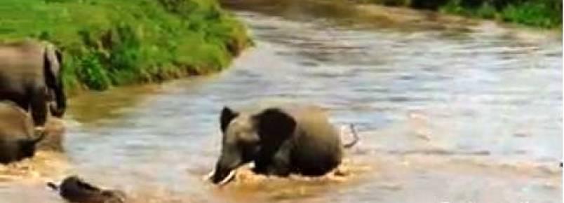 Resgate de filhote de elefante emociona turistas em parque ecológico