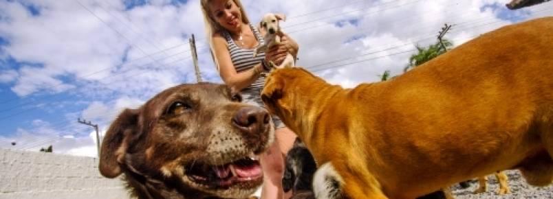 Animais abandonados não têm espaço adequado na Grande Florianópolis
