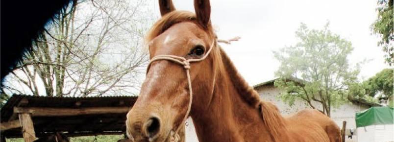 Negligência, maus tratos e desaparecimento de animais são investigados pelo MP