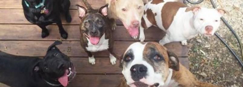 Lei de Montreal que previa banir cães da raça Pit Bull é suspensa por tempo indeterminado