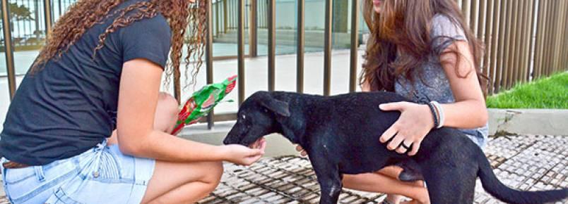 Projeto luta para cuidar de animais que vivem nas ruas