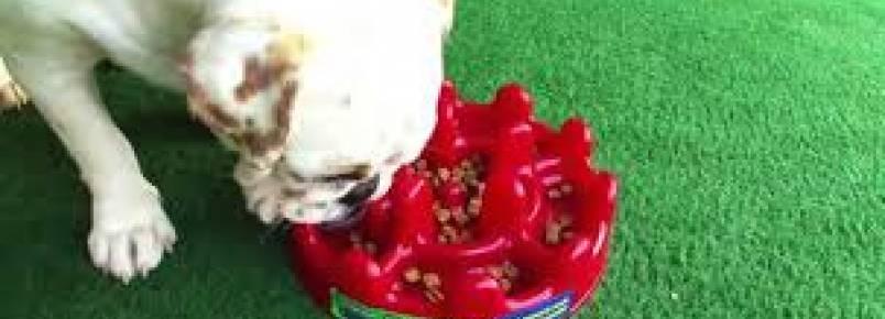 Cachorro comendo muito rápido?