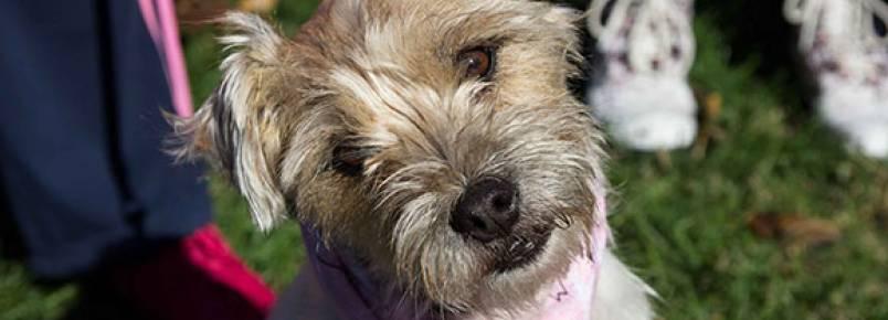 Evento beneficente reúne mais de 700 cães usando bandana e bate recorde mundial