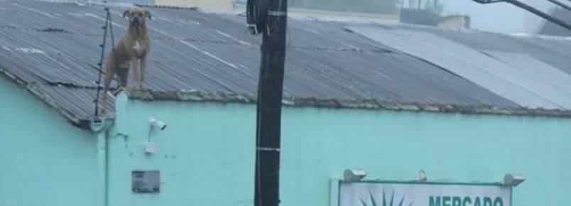 Cachorro fica com medo de trovões e acaba indo parar em telhado de mercado
