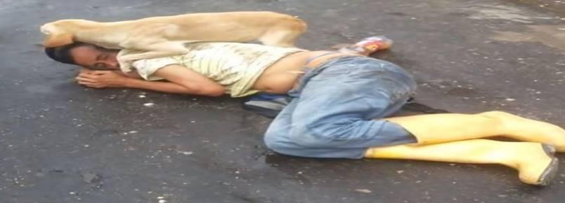 Cachorro protege tutor caído no meio da rua e chama a atenção da população