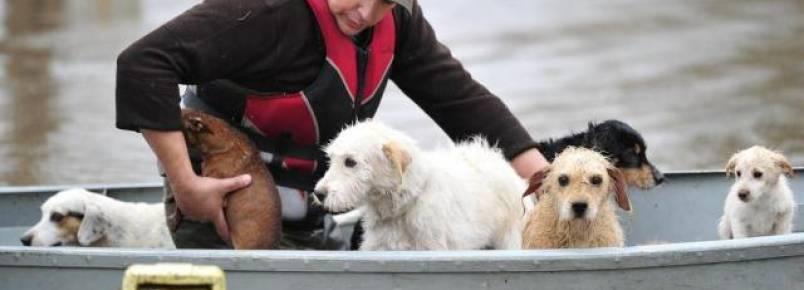 Morador só aceitou resgate quando pôde carregar junto os sete cães da família
