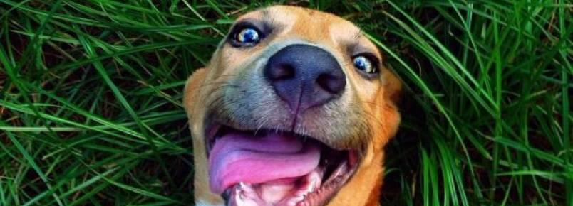 Organização de Proteção aos Animais promove campanhas de doações para se manter funcionando