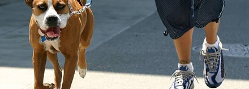 Truque ensina a reconhecer asfalto quente demais para passeio
