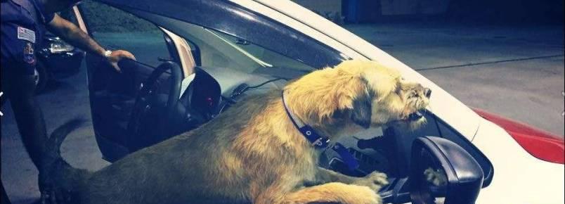 Cabo Pitoco, o cachorro adotado pela PM
