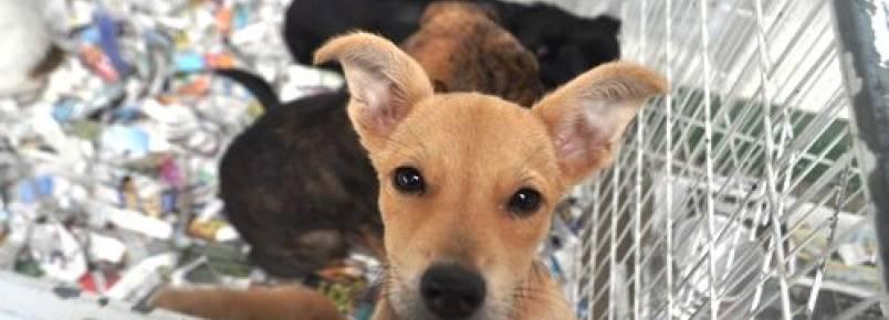 Canil Municipal realiza feira de adoção de cães e gatos neste sábado (23)