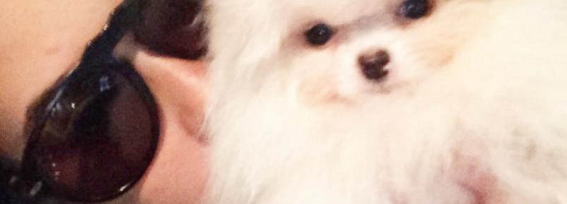 Conheça a nova cachorra de Fernanda Vasconcelos