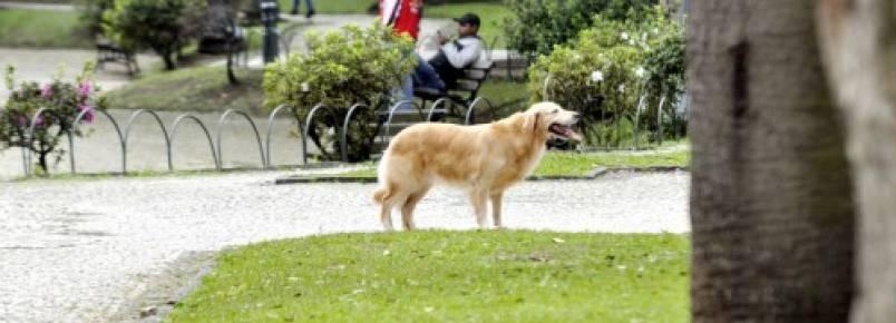 Parques e praças podem ganhar área para bichos de estimação