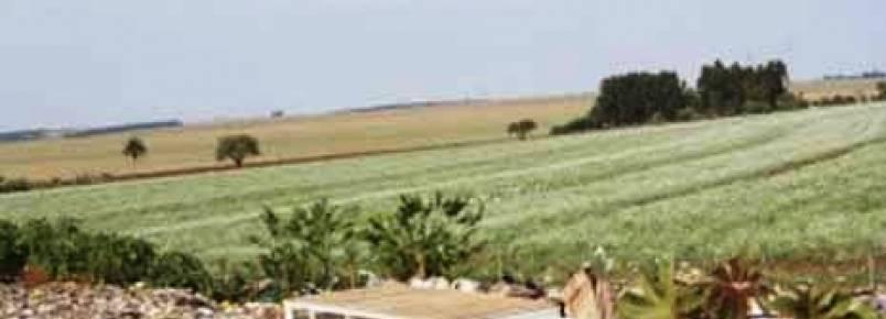 ONG acusa CCZ de exterminar animais sadios
