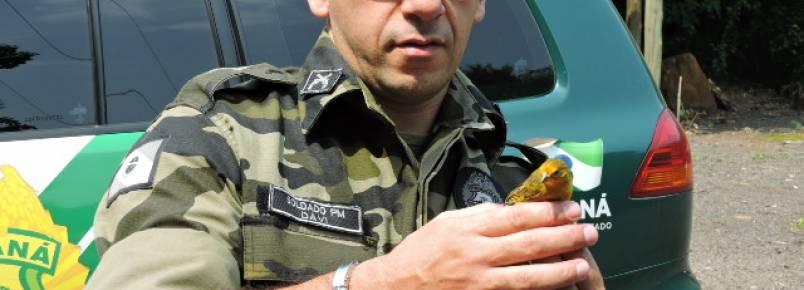 Polícia Ambiental liberta aves encontradas em cativeiros
