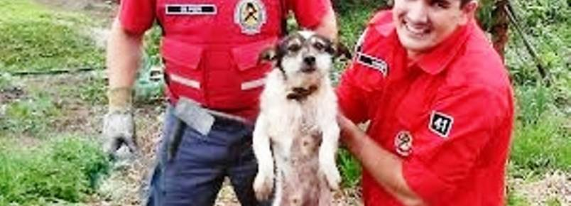 Bombeiros salvam cão que ficou preso entre rochas