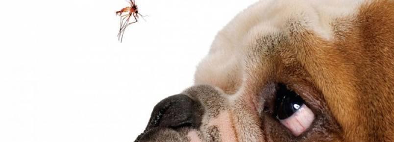 Cachorro pode pegar dengue?