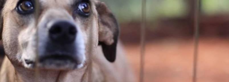 CPI dos Maus-Tratos a Animais se reúne para votar destaques a relatório final