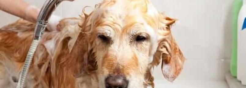 Cuidados e manutenção de um cão de raça grande
