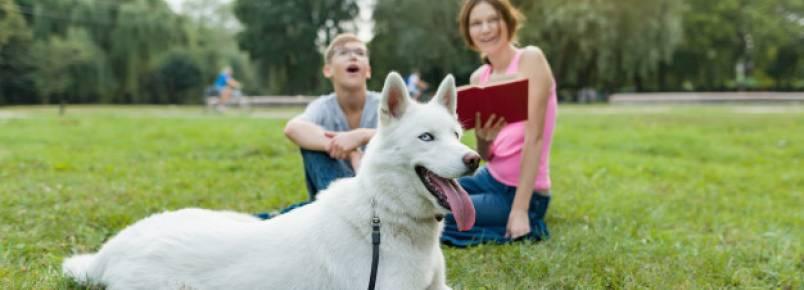 Cachorro ansioso – Sintomas, dicas e tratamento