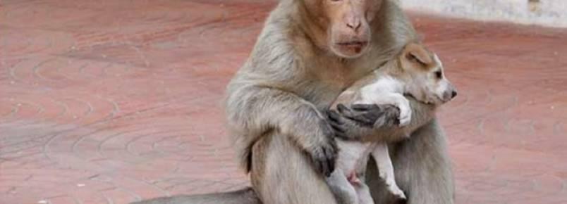 Macaco adota cãozinho de rua como seu filho e causa comoção