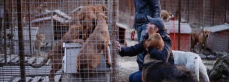 Abrigo de cães em Sochi corre para salvar animais
