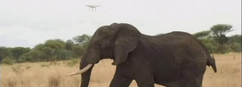 Na Tanzânia, os drones protegem os elefantes